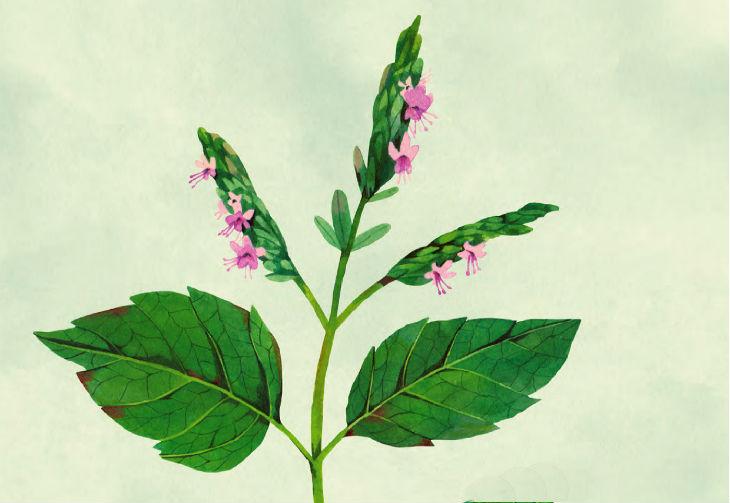 plantas22